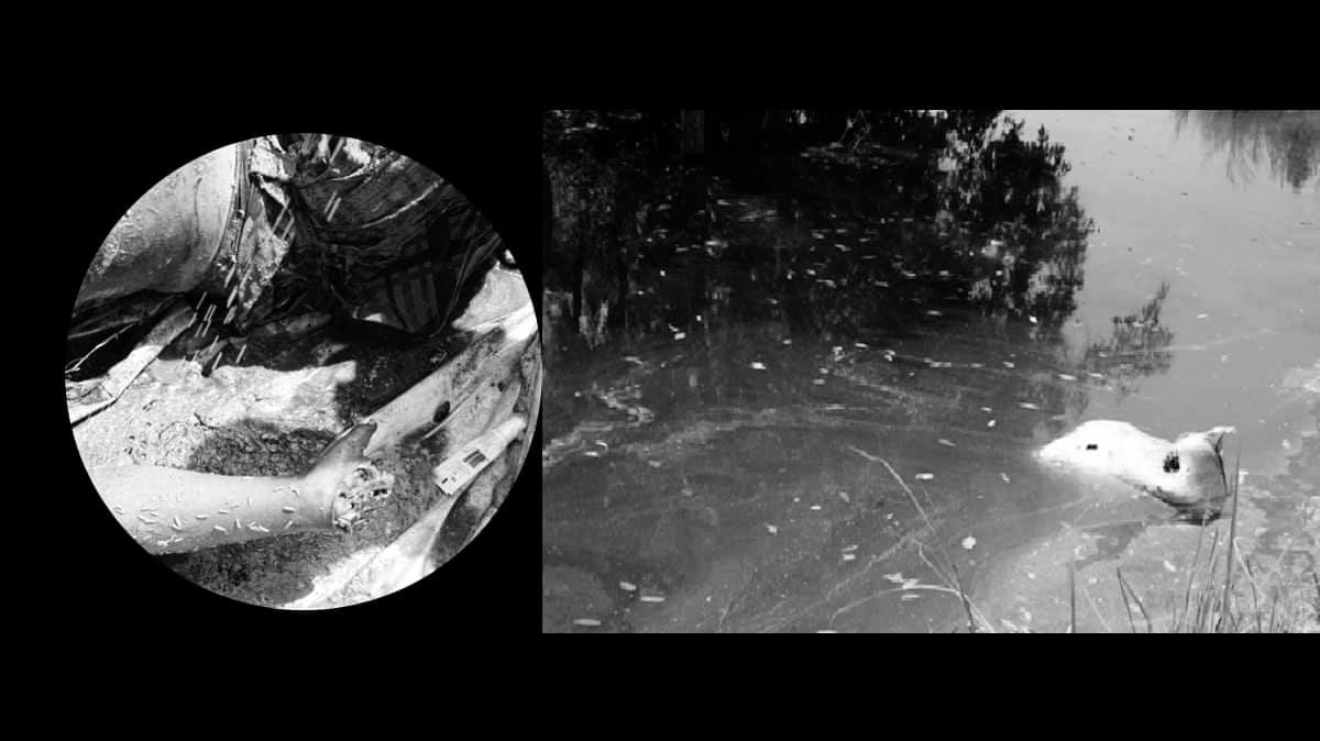 कपिलवस्तुमा  हातका औंलाका लागि महिलाको हत्या